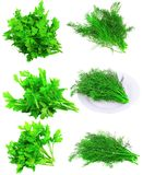 Collage  of Fresh parsley on white.Isolated Stock Image
