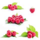 Collage fresh raspberry isolated. On white background Stock Images