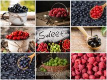 Collage of fresh ripe berries. Healthy vegan food. Set of various berries as background. Collection of color ripe berries royalty free stock image