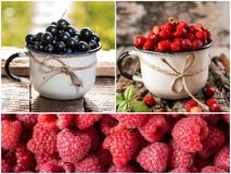 Collage of fresh ripe berries. Healthy vegan food. Set of various berries as background. Collection of color ripe berries royalty free stock photo