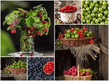 Collage of fresh ripe berries. Healthy vegan food. Set of various berries as background. Collection of color ripe berries stock photo