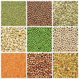 Collage of fresh seeds Stock Images