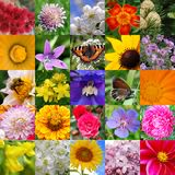 Collage From Beautiful Colours Stock Photos