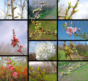 Collage with fruit trees. Collage with eleven fruit trees stock photo