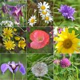 Collage full av wild blommor Arkivfoto
