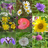 Collage full of wild flowers Stock Photo