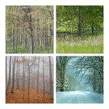collage fyra natursäsonger Fotografering för Bildbyråer