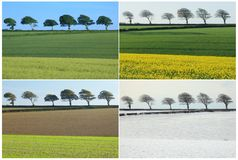 collage fyra säsonger royaltyfria foton