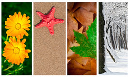 collage fyra säsonger royaltyfri bild