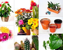 Collage garden plants Royalty Free Stock Photos