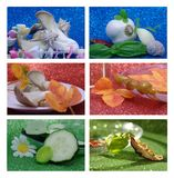 Collage wiht garlic, cucumber and basil Royalty Free Stock Photos