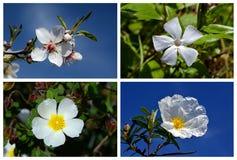 Collage gebildet von den weißen Blumen lizenzfreies stockfoto