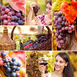 Collage of grape  and vine. Sunny day in vineyard Royalty Free Stock Photography