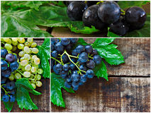 Collage of green and black grapes Stock Images