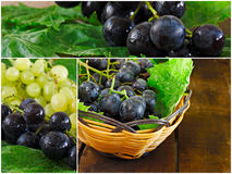 Collage of green and black grapes Royalty Free Stock Images