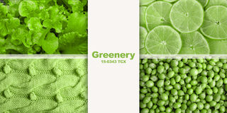 Collage greenery Stock Image