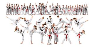 The collage about group of kids training karate martial arts. And posing on white backlground. The attack, sport, taekwondo, children activity concept stock photos