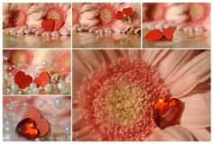 Collage - hearts with daisy Stock Photos