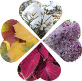 A collage of hearts folded into a four-leafed flower. Filling dr. Awing from natural flower. Four seasons Royalty Free Stock Image