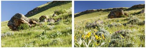 Collage herbeux de minerais de racine de baume de flanc de coteau Photographie stock