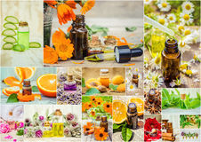Collage of herbs and essential oil. royalty free stock photos