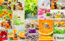 Collage of herbs and essential oil. Stock Photos