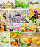 Collage of herbs and essential oil. Stock Image