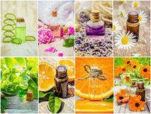 Collage of herbs and essential oil. Royalty Free Stock Photo