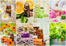 Collage of herbs and essential oil. Royalty Free Stock Images