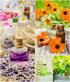 Collage of herbs and essential oil. Stock Photography
