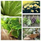 Collage of herbs Royalty Free Stock Photo