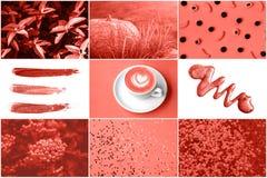 Collage in het Leven Koraalkleur In kleur concepf van het jaar stock afbeelding