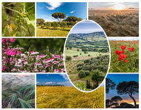 Collage of the hills in Tuscany Stock Photography