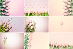 Collage of horizontal pink tulips photos on the pink background. Stock Photography