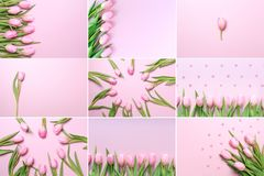 Collage of horizontal pink tulips photos on the pink background. Stock Image