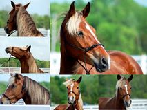 Collage of horses Stock Photos