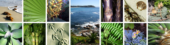 Collage, images tropicales Photo stock