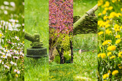 Collage images work in garden and lawn with  gasoline trimmer. Collage images work in garden and dandelion and chamomile lawn with  gasoline trimmer cutting Royalty Free Stock Image