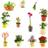 Collage of indoor plants stock images