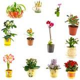 Collage of indoor plants. Of different varieties Stock Images