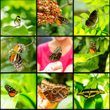 Collage insect butterfly on black background. Collage insect butterfly on green colored background macro stock photos
