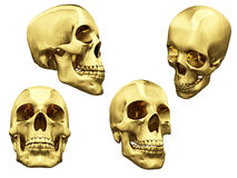 Collage of isolated gold skulls Stock Images