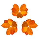 Collage of Isolated yellow orange bright autumn leaves on white background. royalty free stock photo