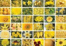 Collage jaune naturel des usines, trente-six éléments, horizonta Images stock