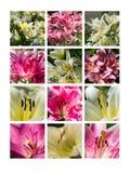 Collage julio Fotografía de archivo