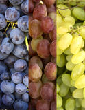 Collage of 3 kinds of grapes Stock Photography