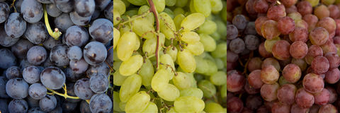 Collage of 3 kinds of grapes Stock Photo