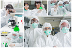 Collage of laboratory workers Royalty Free Stock Images