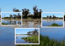 Collage of the lake at Malbup in Tuart National Park  near Busselton West Australia. Stock Photos