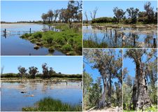 Collage of the lake at Malbup in Tuart National Park  near Busselton West Australia. Stock Photo
